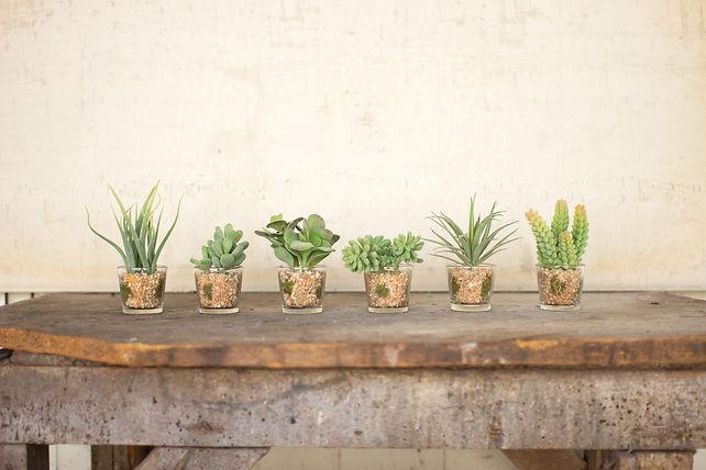 succulents. unique home decor.
