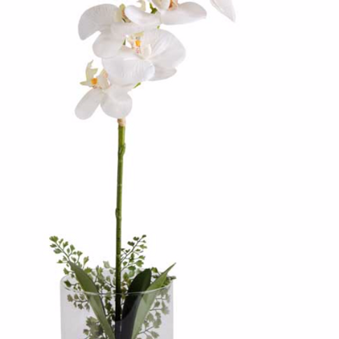 White Orchid in Glass Pot w/Cement Bottom