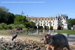 Les hippos de Chenonceau (2020)