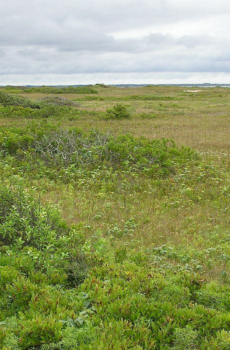 12b Coastal Heathland 2 cropped.jpg
