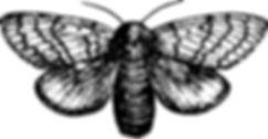 ALA_BlackMoth.jpg