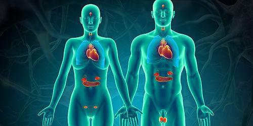 endocrine.jpg