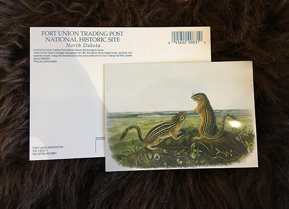 Postcard - Audubon 13 Lined Ground Squirrels