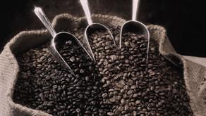 Coffee varieties of India