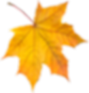 autumn_leaves_PNG3571.png