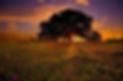 sunsetoak.jpg.png