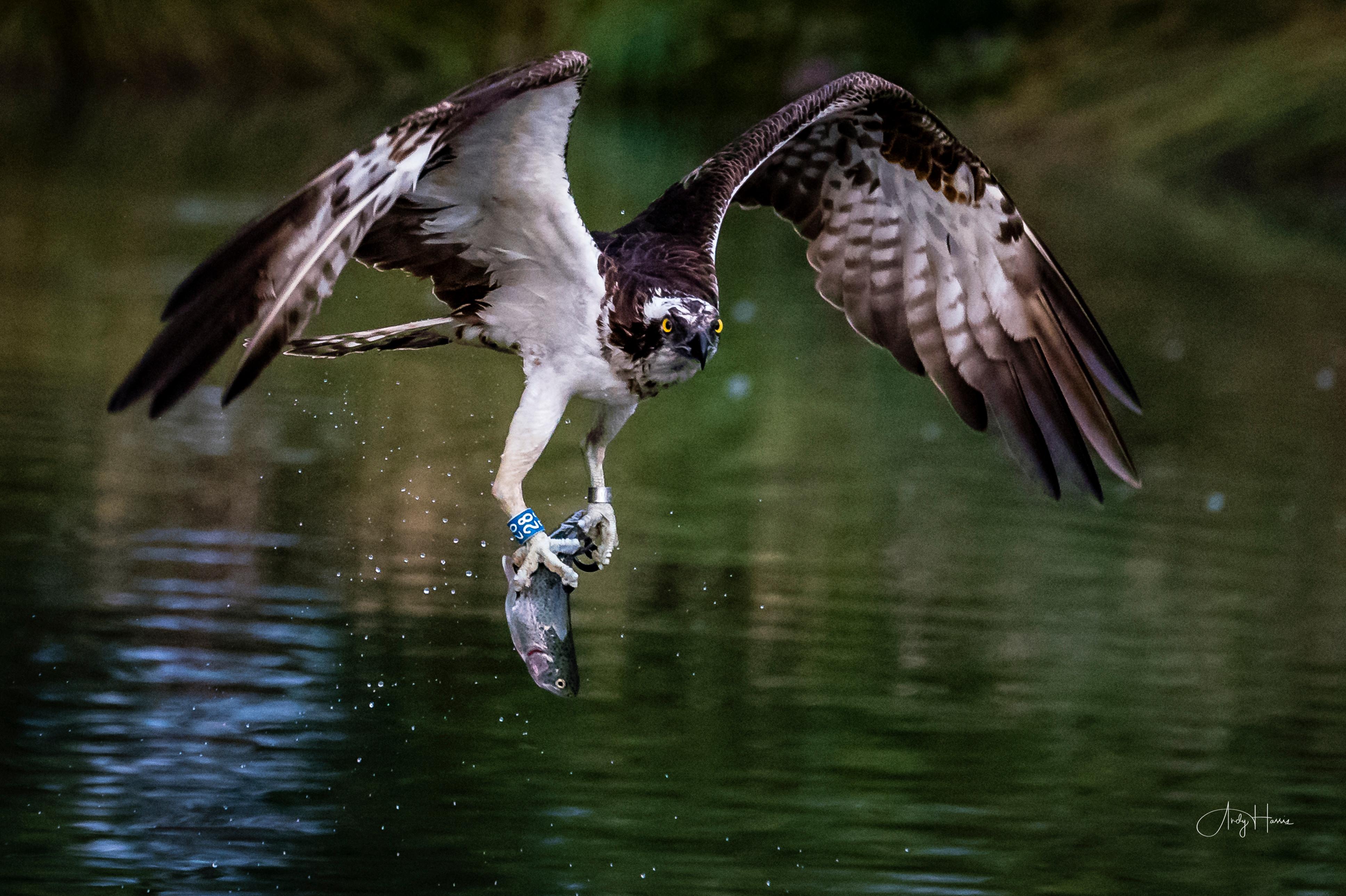 1-2-1 Wildlife Photography coaching