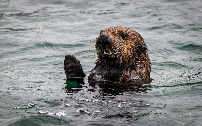 California wildlife-12.jpg
