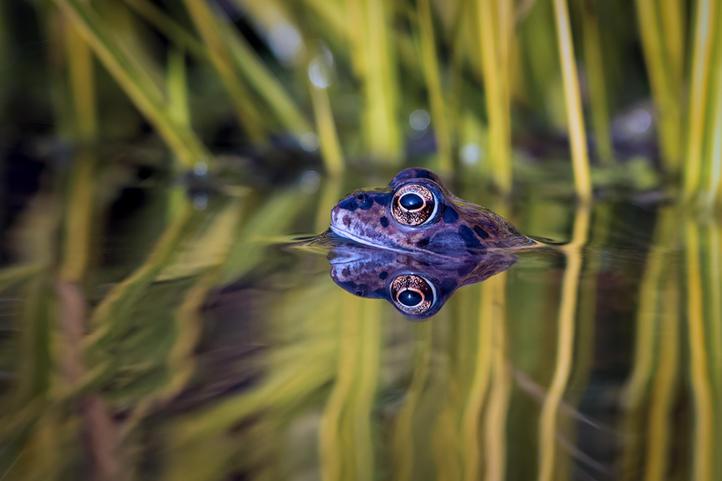 C10_Frog.jpg