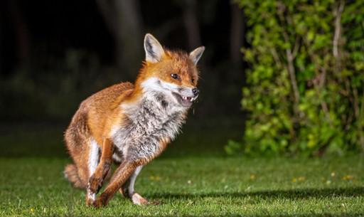 Fox 5.jpg