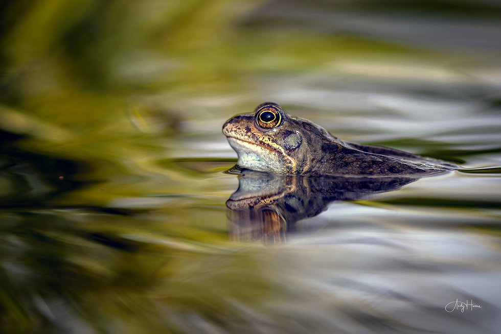 Frogs for website blog-7.jpg