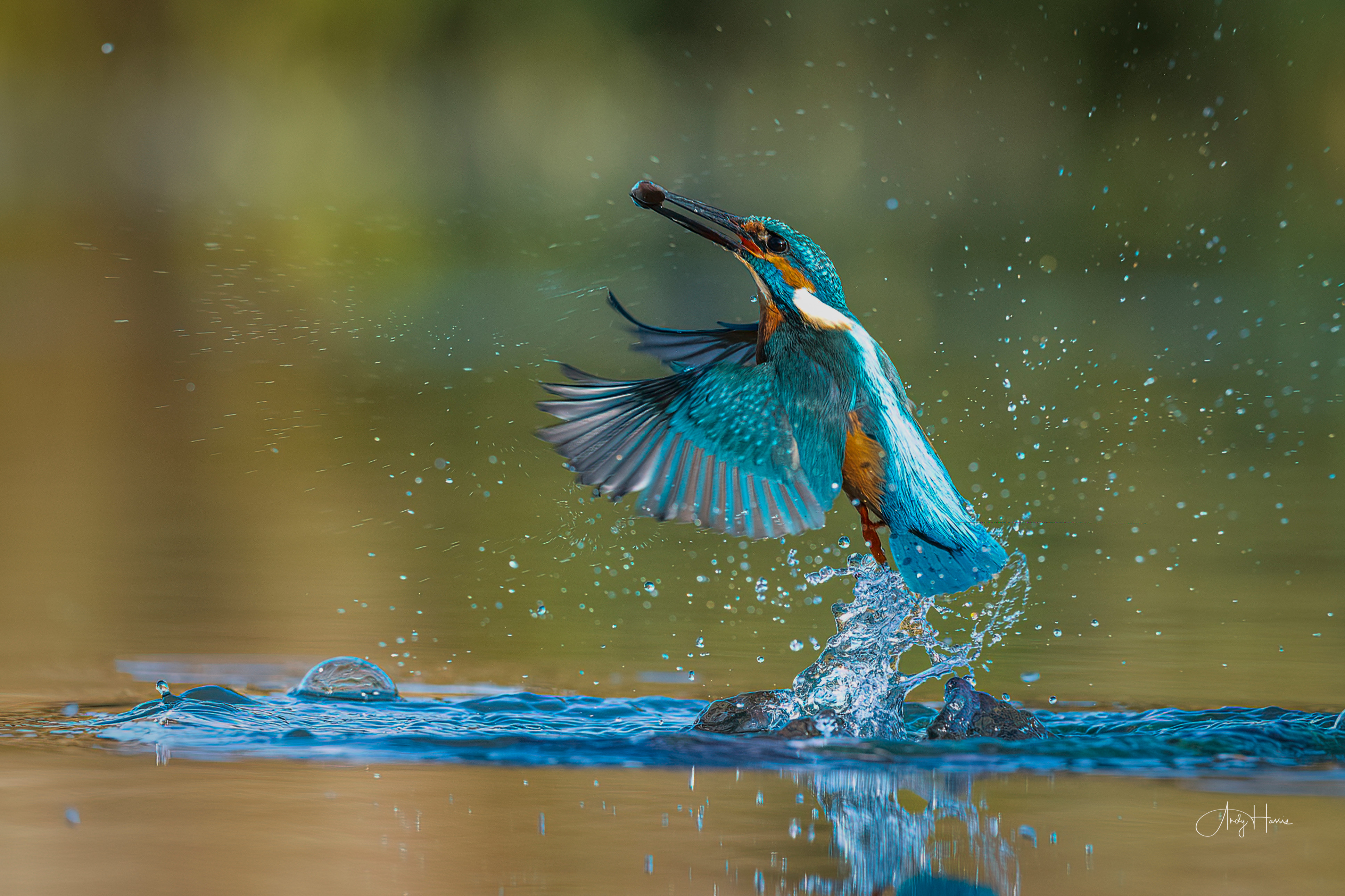A wildlife photography experience gift
