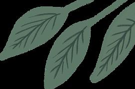 植物.png