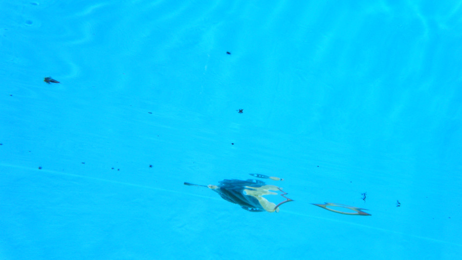 leaf under the surface 2.JPG