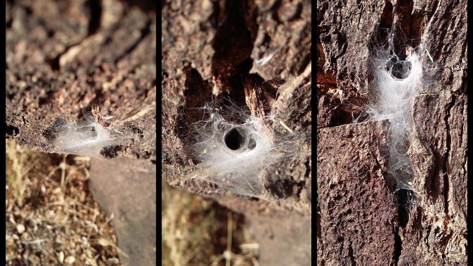 Web, 2016, Hibernating, triptych, 200mm x 120mm.png