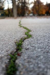 green crack 3 400x600.jpg