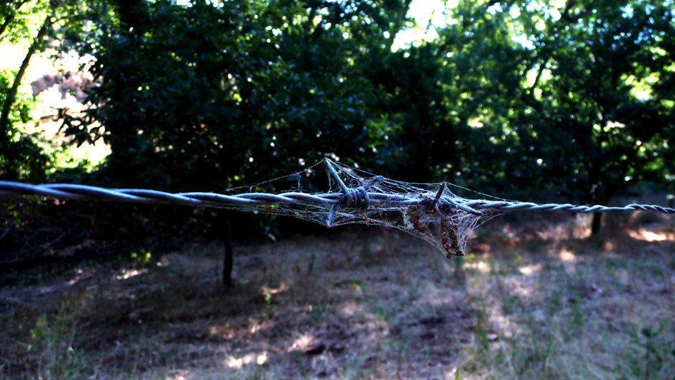 web 19 barbed wire colour.jpg