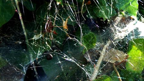 web 6 colour.jpg