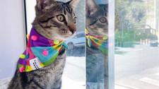 Johnny Cash: conheça o gato da influenciadora Thátyna Dhanyta Braga