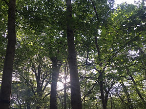 Mindfull, woodland, trees, relaxation, chillout, relaxingin Devon, things to do in Devon, visit Devon, mindful Devon, Mindfullness, welbeing, digital detox, sunlight, wondering, imagination, thought prevoking