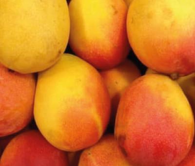 Mangos - The Love Fruit!