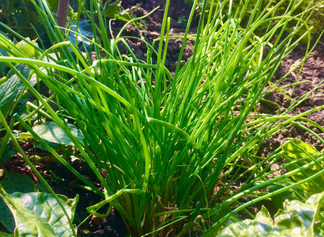 Chives!