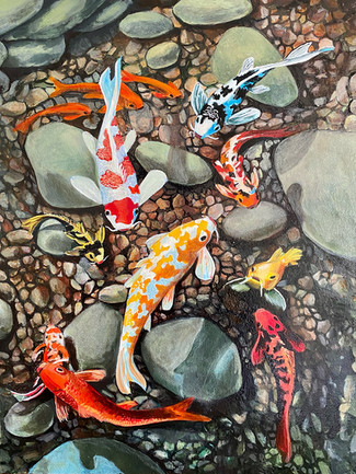 Japon Koi Balıkları
