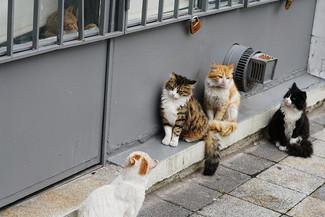 cat+meet.jpeg
