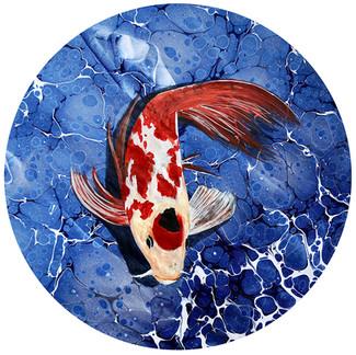 Japon Koi Balığı