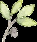 art guild of scarborough leaf