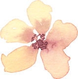 Peachy-yellow_flower.png