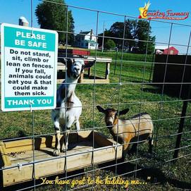 Creekbed Farmacy animals