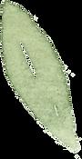 Single_leaf.png