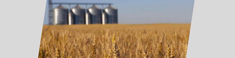 Grain Loadout Systems.png