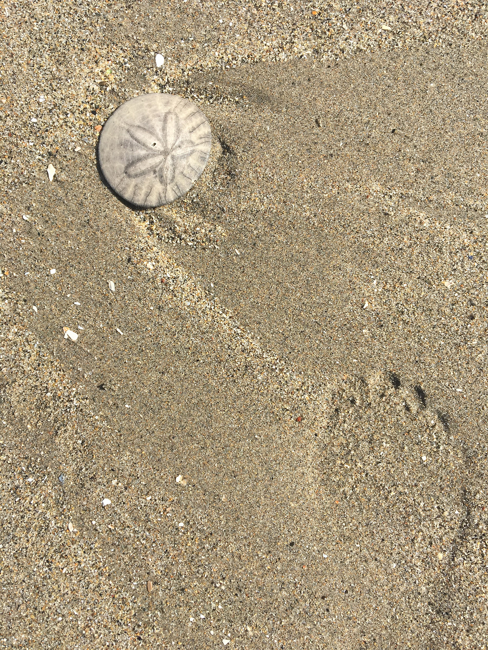 neutral colors in beach sand