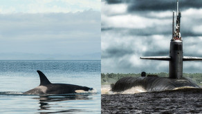 Protect endangered orcas from U.S. navy weapons testing