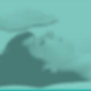IPSB headers with program colors WEBSITE