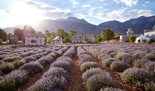 Young_Living_Lavender_Farm_and_Distiller