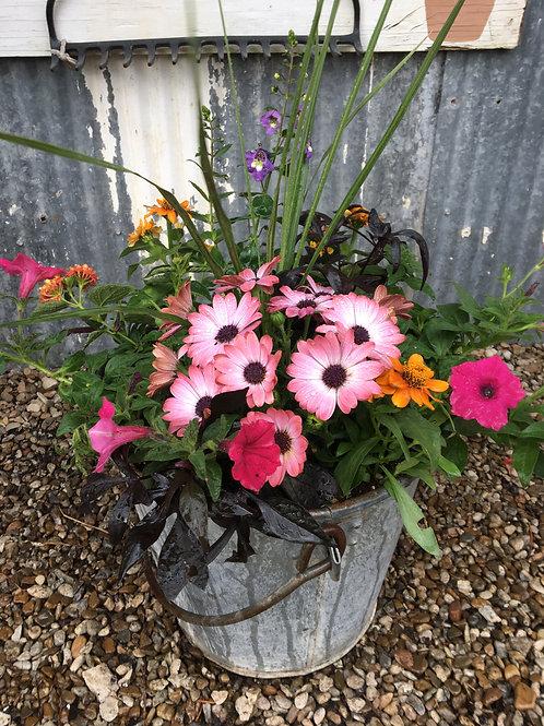 Tin Bucket Combo (Lantana, Petunias, Osteospermum)