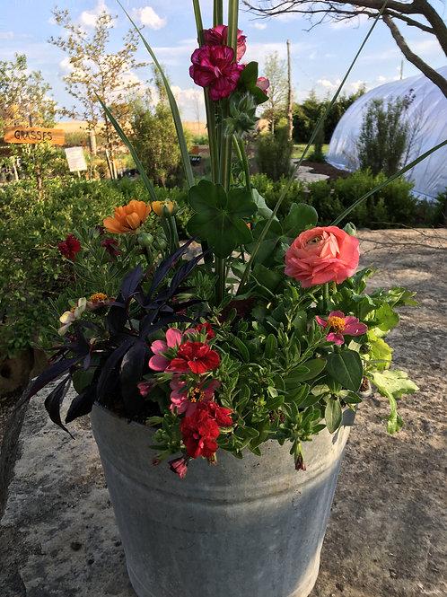 Tin Bucket Combo (Geranium, Lantana, Ranunculus)