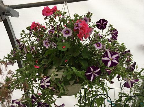 """Hanging Basket (Pink Geranium, Purple Petunias) 12"""""""