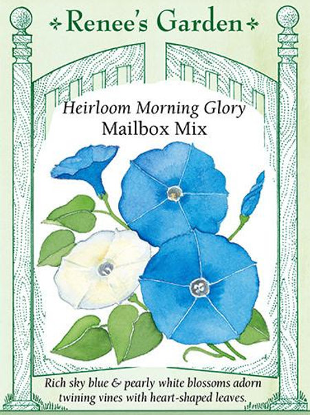 Renee's Garden Heirloom Morning Glory Mailbox Mix Seed Packet