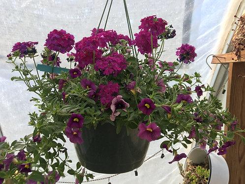 "12"" Purple Petunia & Verbena Combo Hanging Basket"