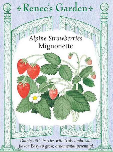 Renee's Garden Alpine Strawberries Mignonette Seed Packet