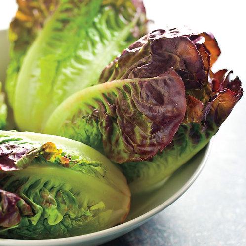 Mini Romaine Blend Lettuce