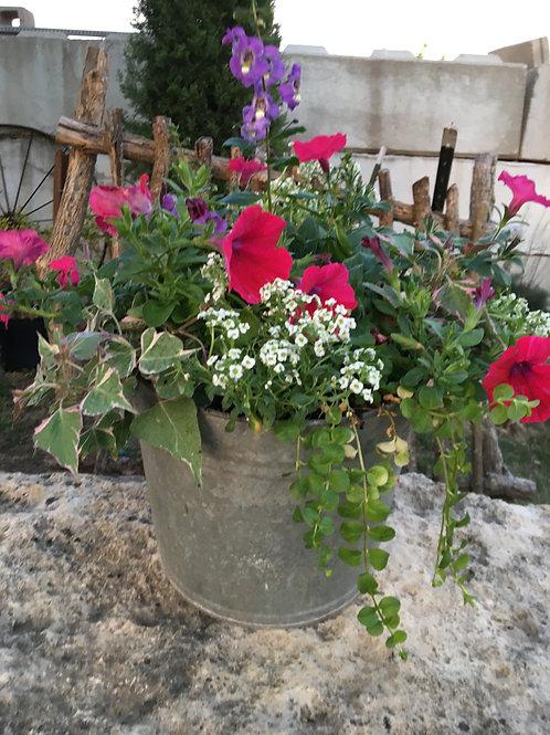 Tin Bucket (Petunias, Angelonia) Combo