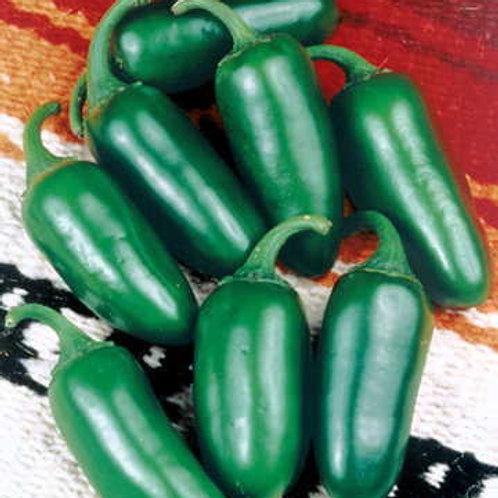 Early Jalapeno Organic Pepper