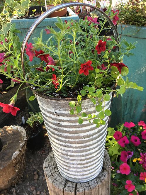 Cream Tin Ribbed Bucket Combo (Red and Creeping Jenny)