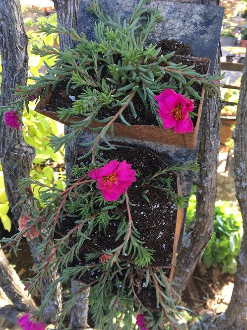 Rose Moss Grain Conveyor Belt Combo (Pinks)