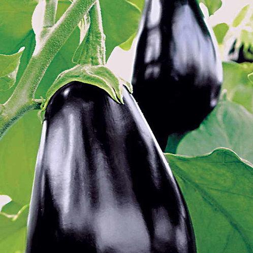 Amadeo Eggplant
